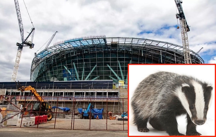 Spurs stadium and badger