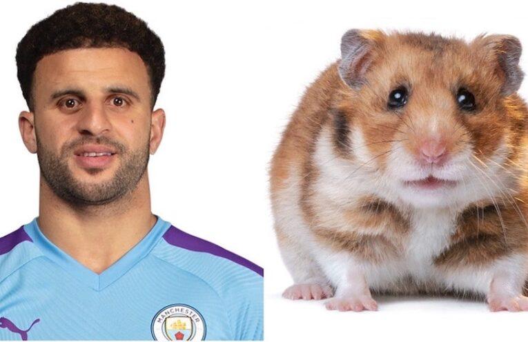 Walker and Hamster